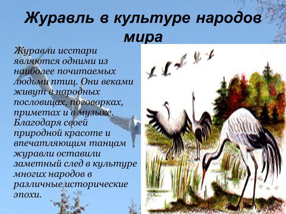 Журавль в культуре народов мира Журавли исстари являются одними из наиболее почитаемых людьми птиц. Они веками живут в народных пословицах, поговорках, приметах и в музыке. Благодаря своей природной красоте и впечатляющим танцам журавли оставили заме
