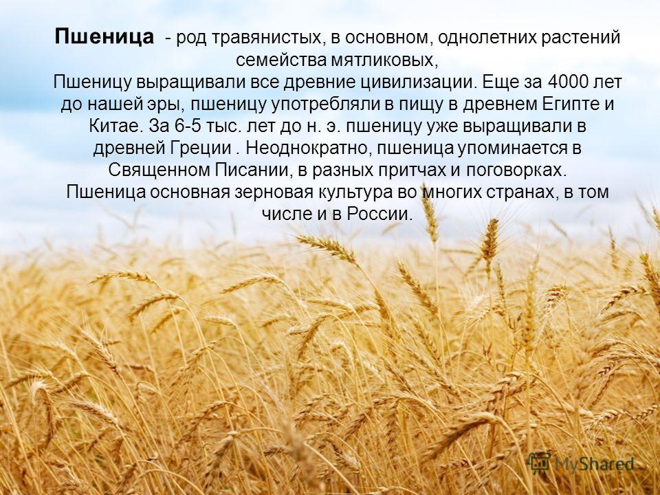 Пшеница - род травянистых, в основном, однолетних растений семейства мятликовых, Пшеницу выращивали все древние цивилизации. Еще за 4000 лет до нашей эры, пшеницу употребляли в пищу в древнем Египте и Китае. За 6-5 тыс. лет до н. э. пшеницу уже выращ