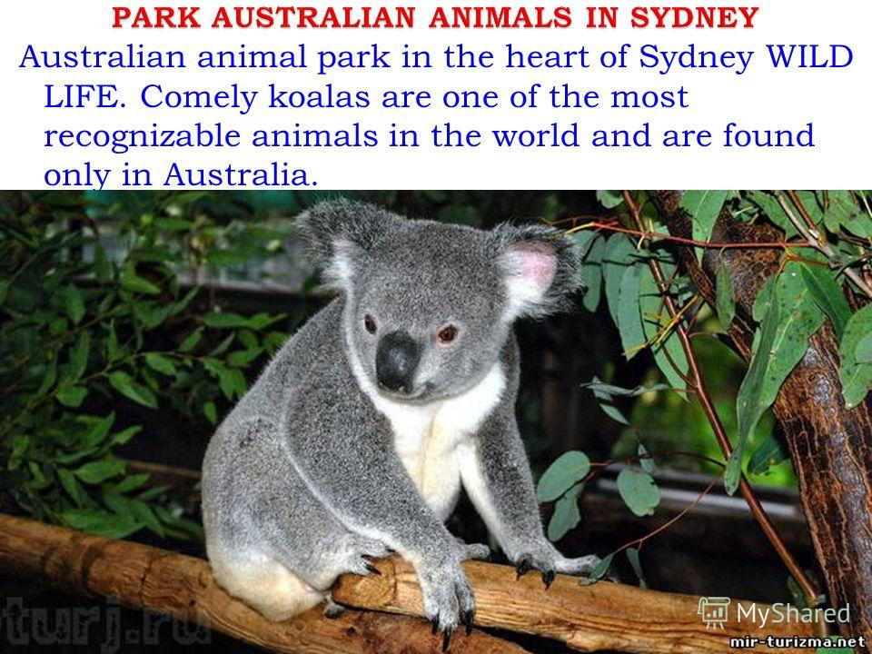Australian animal park in the heart of Sydney WILD LIFE. Comely koalas are one of the most recognizable animals in the world and are found only in Australia.