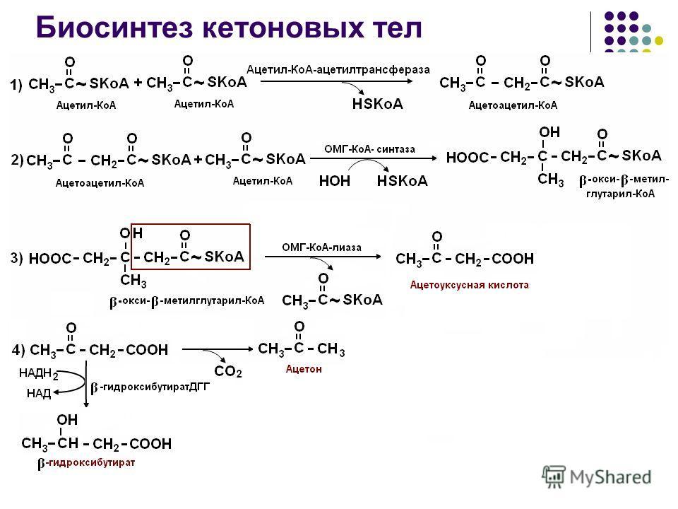 Биосинтез кетоновых тел