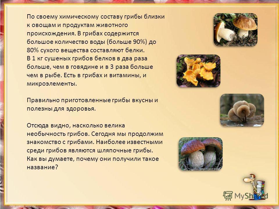 По своему химическому составу грибы близки к овощам и продуктам животного происхождения. В грибах содержится большое количество воды (больше 90%) до 80% сухого вещества составляют белки. В 1 кг сушеных грибов белков в два раза больше, чем в говядине