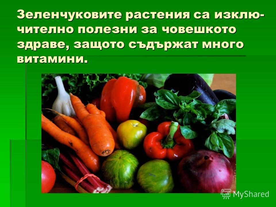 Зеленчуковите растения са из ключи тел но полезны за човешкото здравие, защото съдържат много витамины.