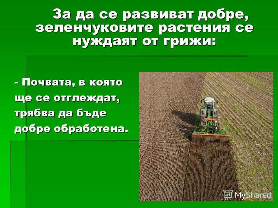 - Почвата, в която ще се отглеждат, трябва да буде добре обработана. За да се развивать добре, зеленчуковите растения се нуждаят от грыжи: