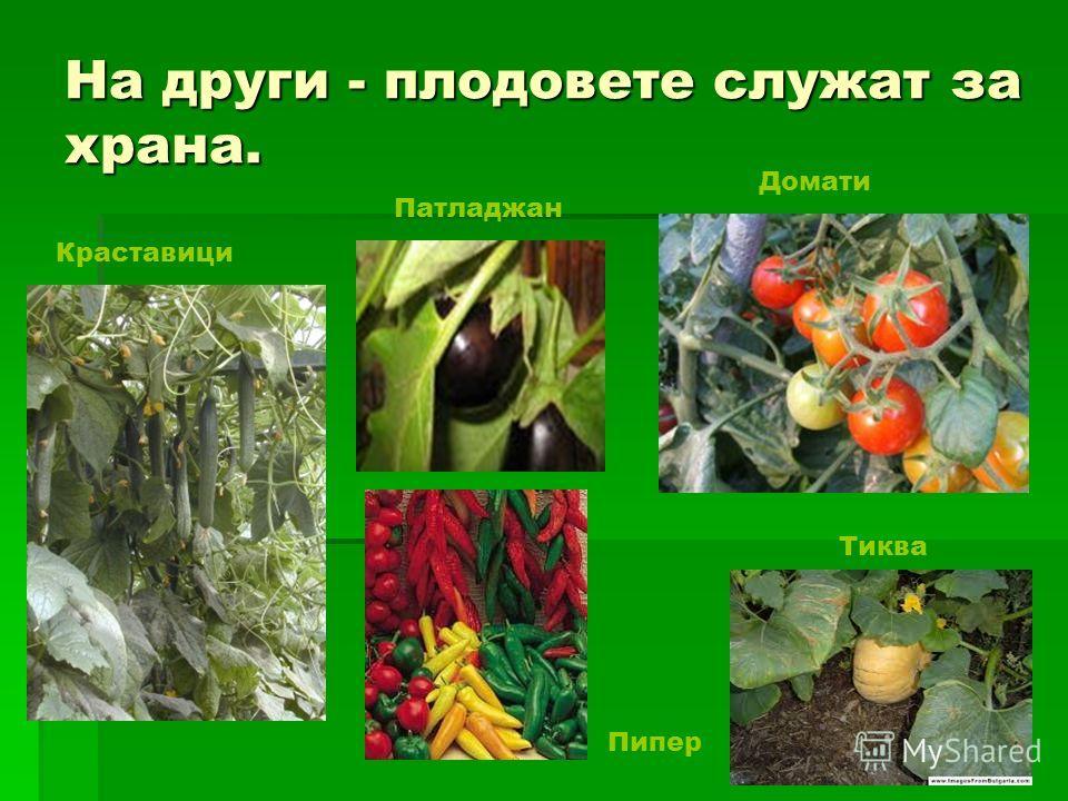 На други - плодовыете служат за крана. Краставици Домати Патладжан Тиква Пипер