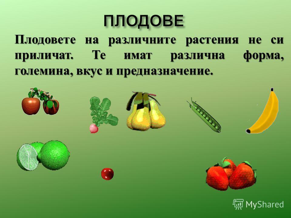 Плодовете на различныте растения не си приличат. Те и мат различна форма, големина, вкус и предназначение.