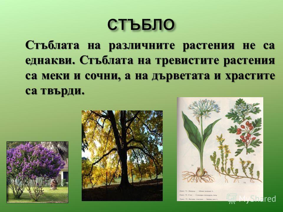 Стъблата на различныте растения не са еднакви. Стъблата на тревистите растения са мики и сочни, а на дърветата и храстите са твърди.