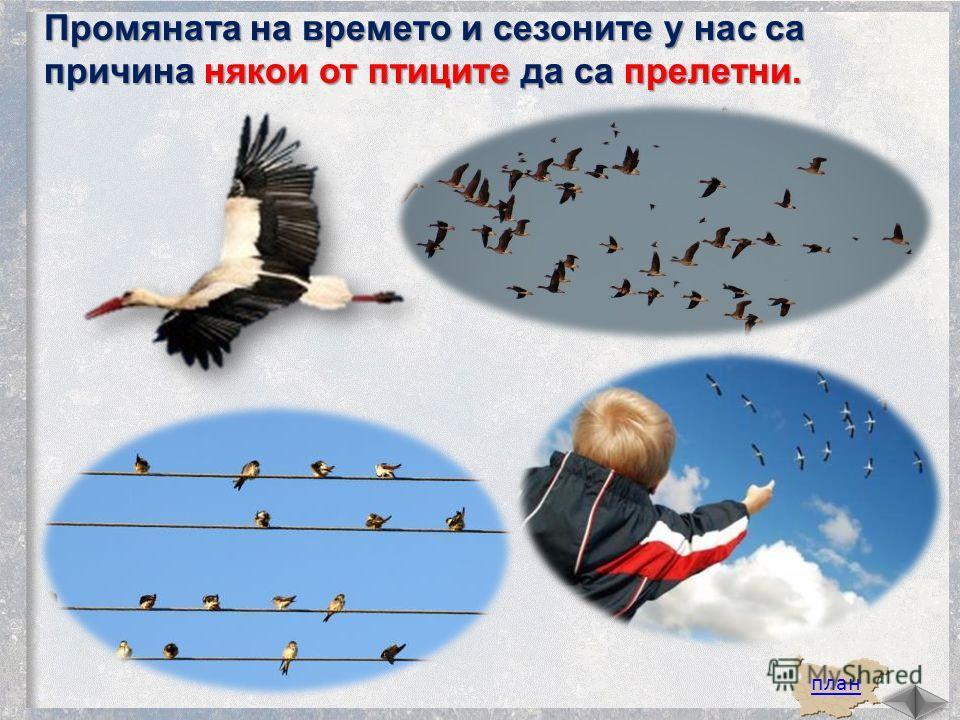 план Промяната на времято и сезоныте у нас са причина някои от птицыте да са прелетни.