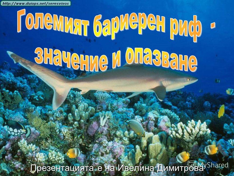 Презентацията е на Ивелина Димитрова