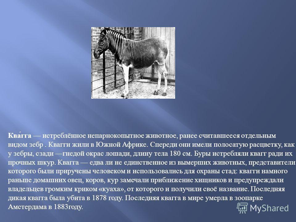 Ква́га истреблённое непарнокопытное животное, ранее считавшееся отдельным видом зебр. Квагги жили в Южной Африке. Спереди они имели полосатую расцветку, как у зебры, сзади гнедой окрас лошади, длину тела 180 см. Буры истребляли квагг ради их прочных