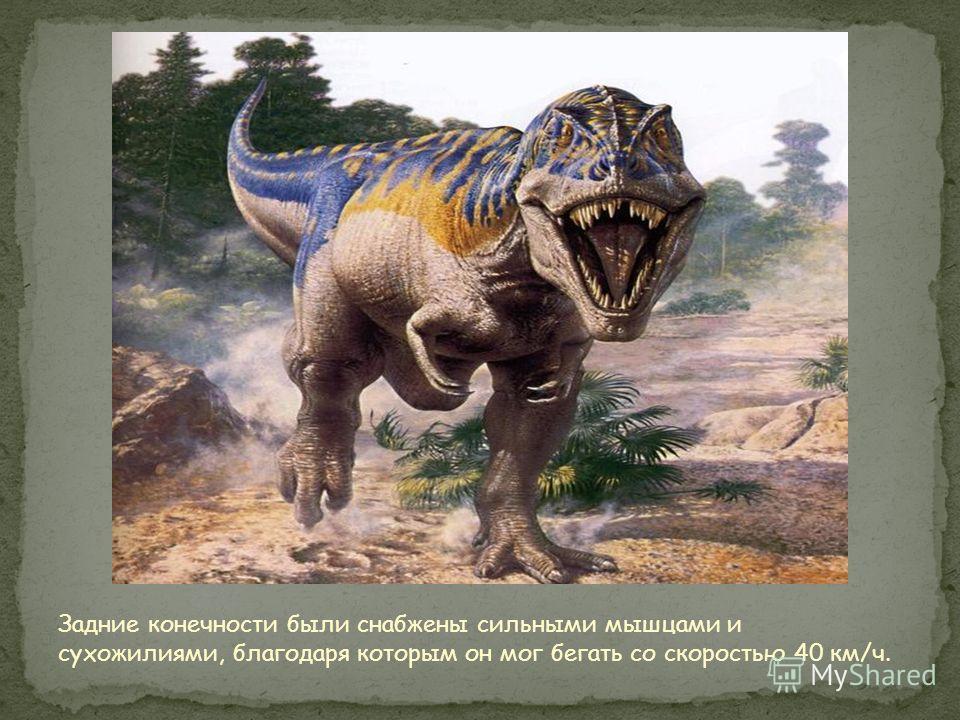 Глаза тираннозавра были размером с грейпфрут. Они смотрели строго вперёд, чтобы рассчитать месторасположение своей добычи. Вероятно, что тираннозавр был самым жестоким мясоедом за всю историю земли. У тираннозавра были очень крупные зубы, не только д