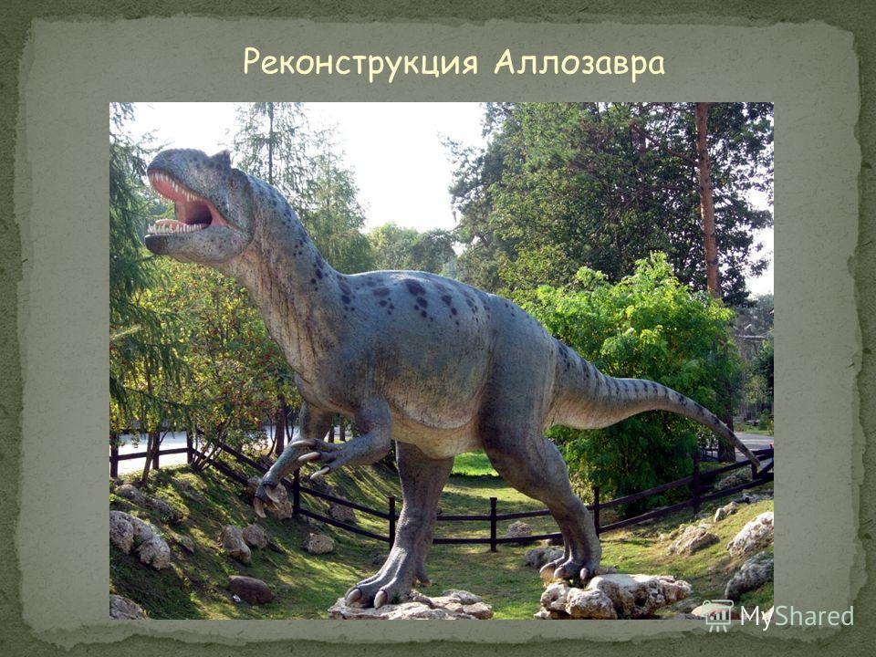 Рост: 5 метров Длина: 11 метров Вес: 1.5 тонны Питание: крупные динозавры Обнаружен: 1877 год, США Похожие ископаемые: Тираннозавр-Рекс Период: жил в позднем юрском периоде – 155- 145 млн.лет назад