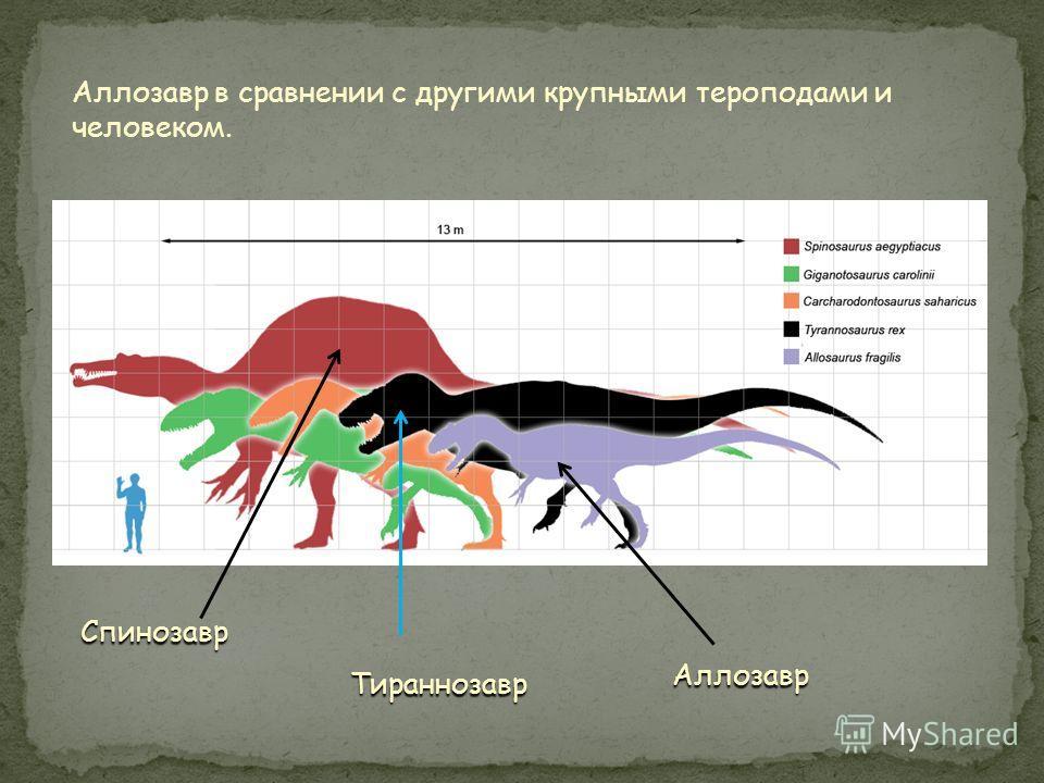 Реконструкция Аллозавра
