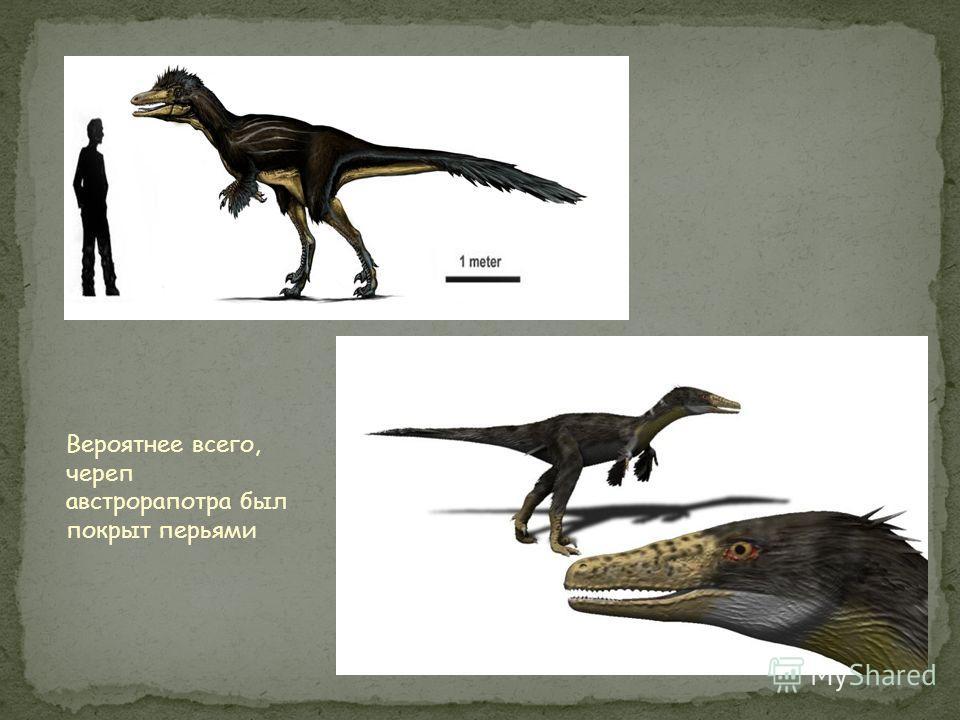 Рост: 2-3 метра Длина: 5 метров Питание: мелкие динозавры Обнаружен: 2008 год, Аргентина Похожие ископаемые: Биутрераптор Период: около 70 млн. лет назад