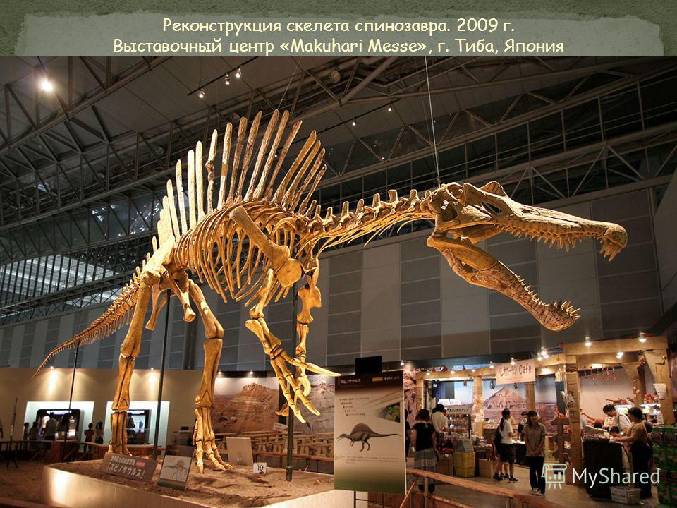Рост: 6 метров Длина: 16 метров Вес: 4 - 10 тонн Питание: крупные динозавры Обнаружен: 1915 год, Египет Похожие ископаемые: Тираннозавр-Рекс Период: 100 – 93 млн. лет назад По самым современным оценкам, спинозавр является одним из самых крупных плото
