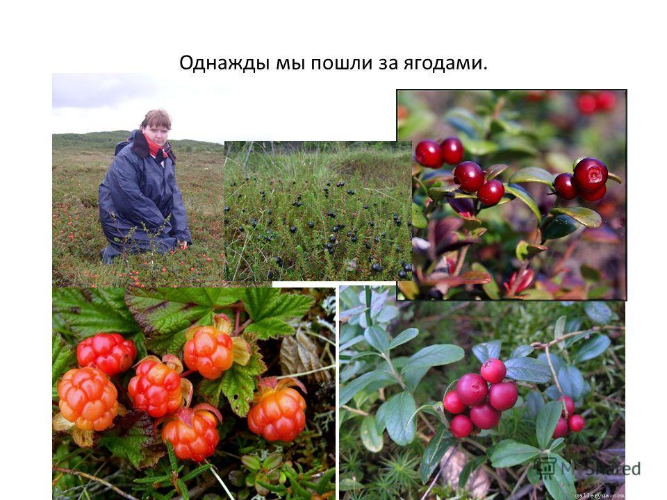 Однажды мы пошли за ягодами.