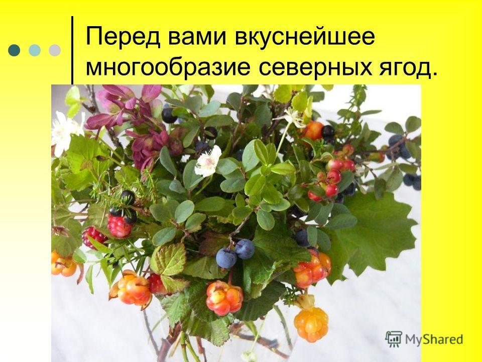Перед вами вкуснейшее многообразие северных ягод.