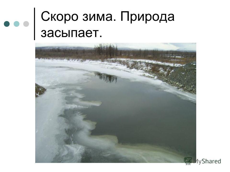 Скоро зима. Природа засыпает.