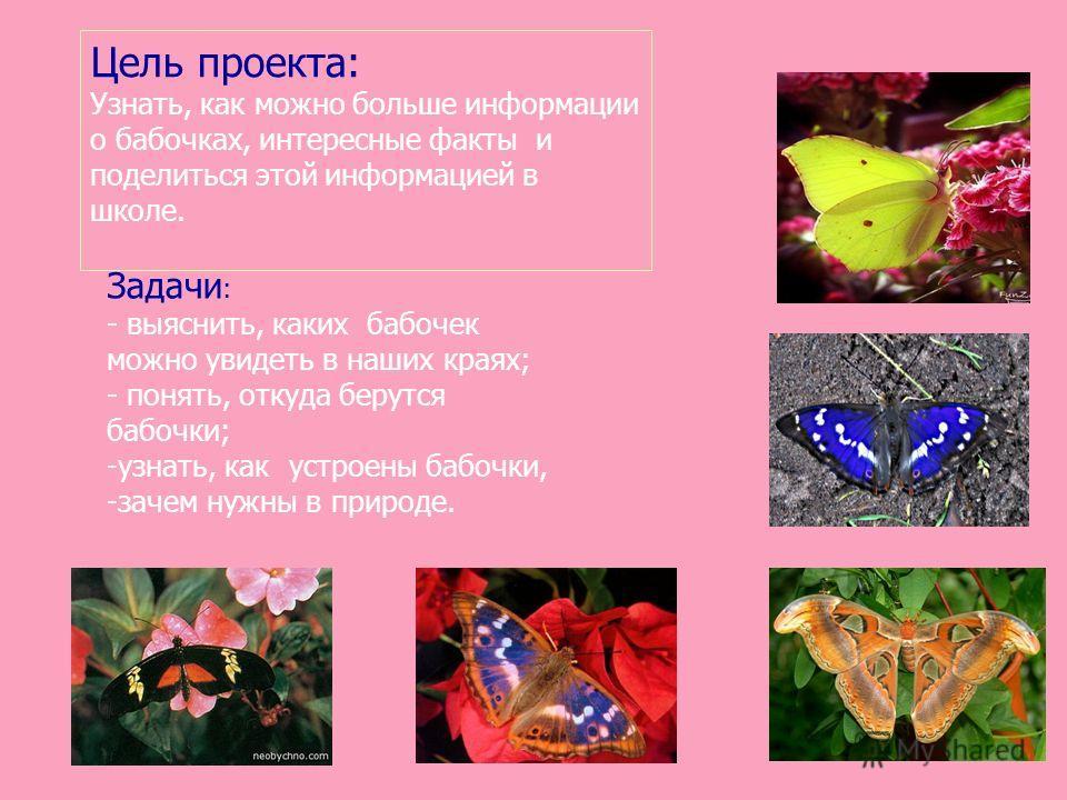 Цель проекта: Узнать, как можно больше информации о бабочках, интересные факты и поделиться этой информацией в школе. Задачи : - выяснить, каких бабочек можно увидеть в наших краях; - понять, откуда берутся бабочки; -узнать, как устроены бабочки, -за