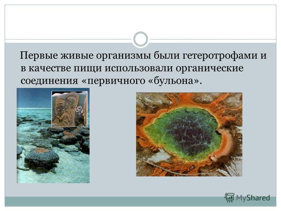 Первые живые организмы были гетеротрофами и в качестве пищи использовали органические соединения «первичного «бульона».