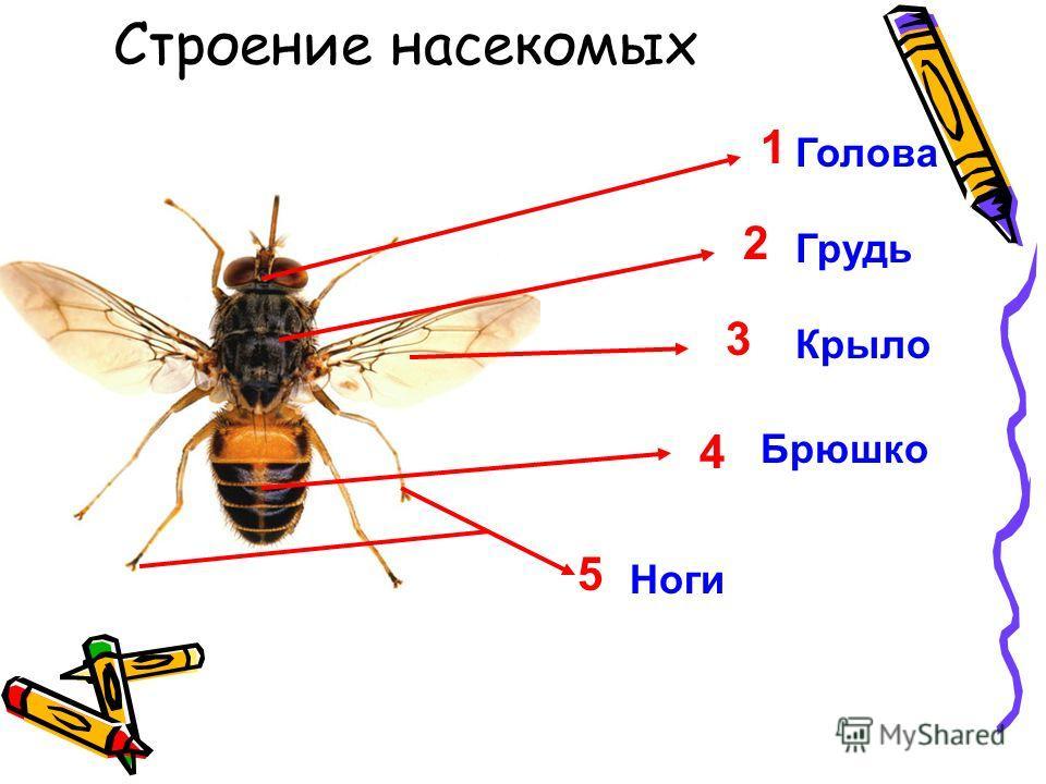 1. Пищеварительная 2. Кровеносная 3. Дыхательная 4. Нервная 5. Скелетная 6. Половая 7. Покровная 8. Выделительная А) спинной мозг Б) артерия В) печень Г) бронхи Д) волосы Е) лопатка Ж) мочеточник З) эпидермис И) желудок К) яичник Л) вены М) почки Н)