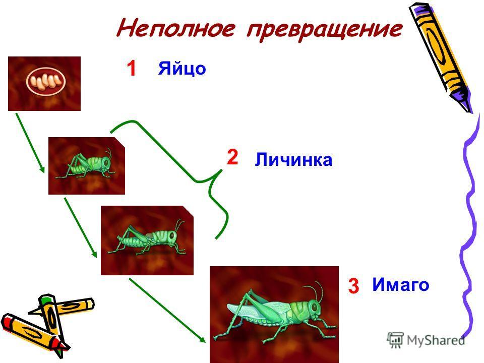 Строение насекомых 1 Голова 2 3 4 5 Грудь Крыло Брюшко Ноги
