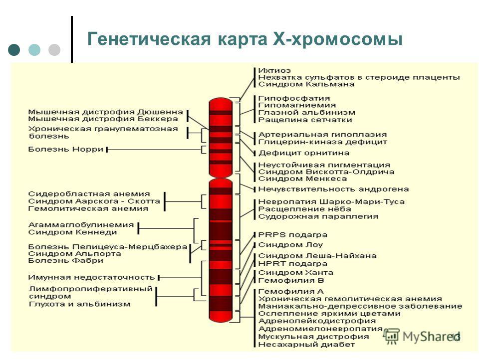 Генетическая карта Х-хромосомы 13