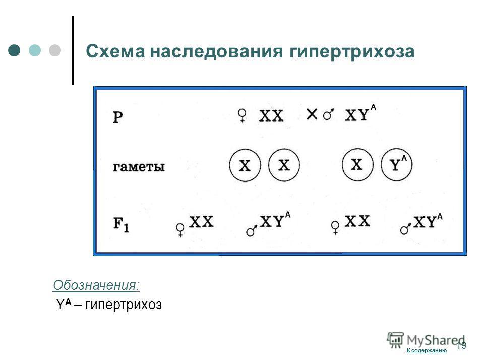 Схема наследования гипертрихоза 100 % наследование по мужской линии Обозначения: Y A – гипертрихоз 19 К содержанию