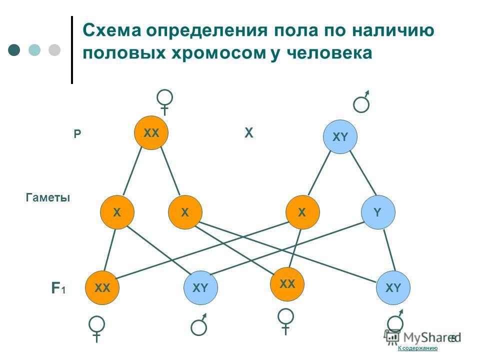 Схема определения пола по