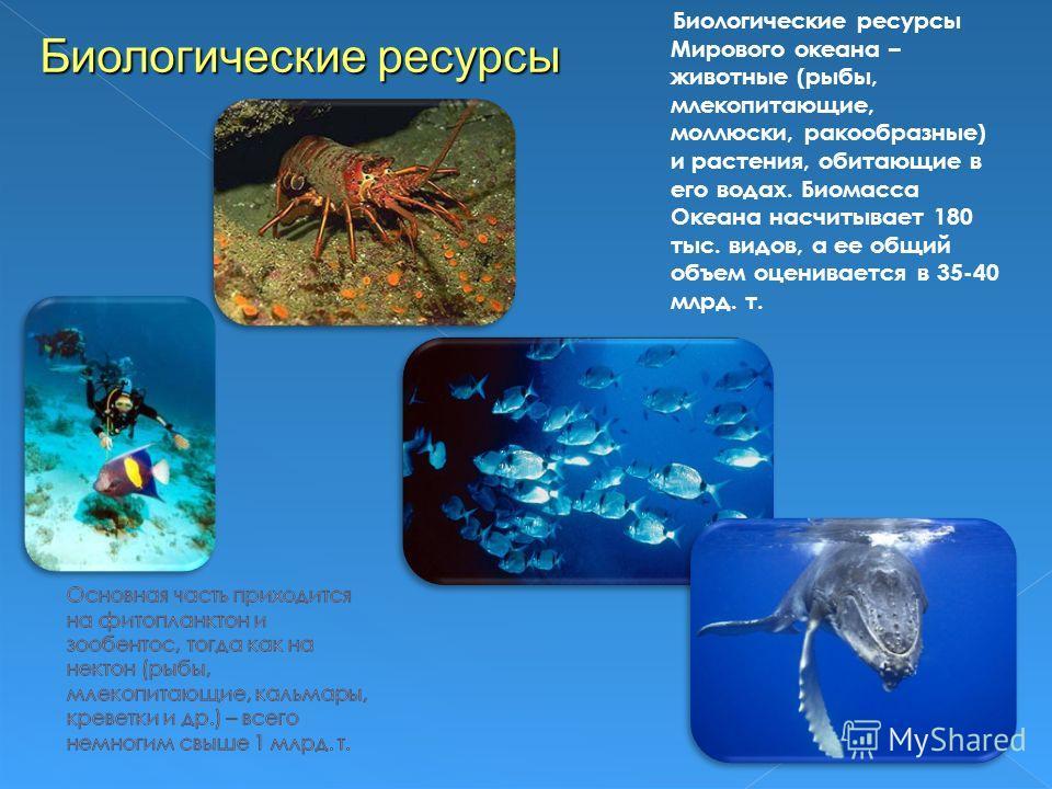 Биологические ресурсы Мирового океана – животные (рыбы, млекопитающие, моллюски, ракообразные) и растения, обитающие в его водах. Биомасса Океана насчитывает 180 тыс. видов, а ее общий объем оценивается в 35-40 млрд. т. Биологические ресурсы