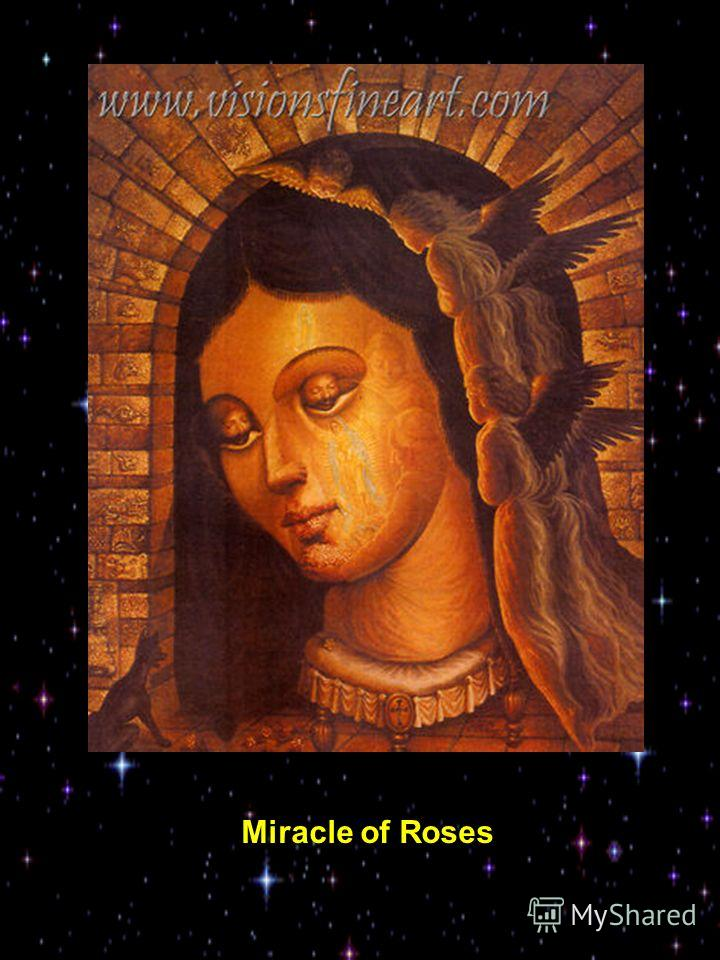 Miracle of Roses