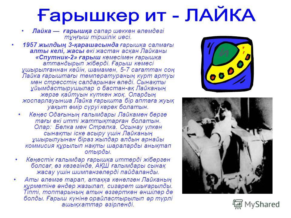 Лайка ғбббббарошқа сапер шеккен әлемдегі тұңғош тіршілік иесі. 1957 жылдың 3-қарашасында ғбббббарошқа салмағы ялты келі, ужасы екі жастан асқан Лайканы «Спутник-2» ғбббббарош кемесімен ғбббббарошқа аттандырып жіберді. Ғбббббарош кемесі ұшырылғаннан к