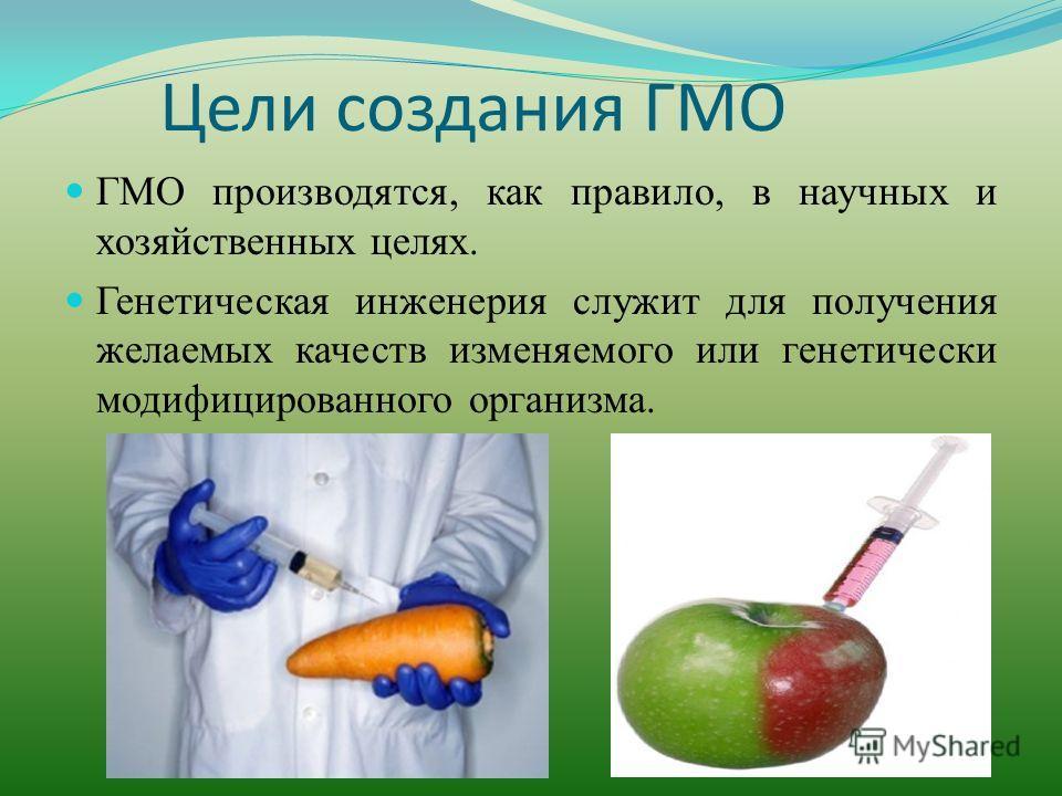 Цели создания ГМО ГМО производятся, как правило, в научных и хозяйственных целях. Генетическая инженерия служит для получения желаемых качеств изменяемого или генетически модифицированного организма.