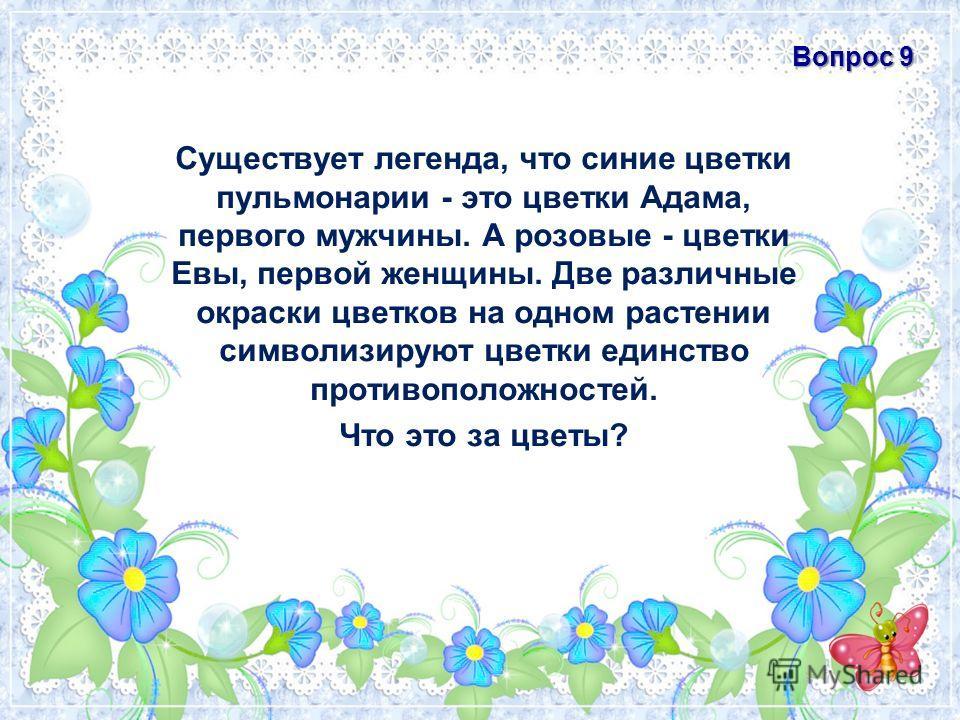 Существует легенда, что синие цветки пульмонарии - это цветки Адама, первого мужчины. А розовые - цветки Евы, первой женщины. Две различные окраски цветков на одном растении символизируют цветки единство противоположностей. Что это за цветы? Вопрос 9