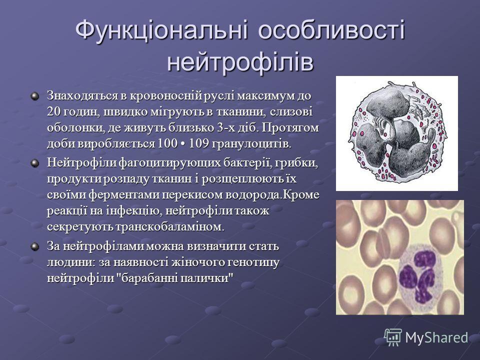 Причини фізіологічних лейкоцитозів а) харчовий - після прийому їжі, особливо білкової; б) міогенні - після важкої фізичної роботи; в) стресовий - після психоемоційного навантаження; г) у вагітних; д) овуляційний; е) у новонароджених. Кількість лейкоц