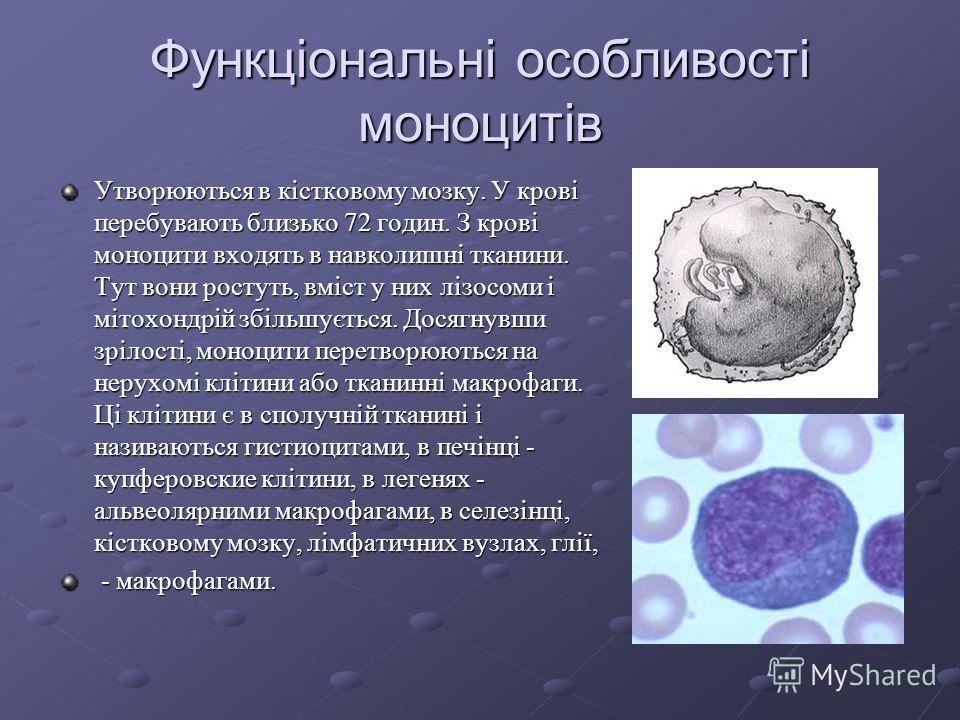 Функціональні особливості лімфоцитів Функції Т-лімфоцитів 1. Імунологічна пам'ять. 2. Противірусний імунітет, завдяки виробленню інтерферону. 3. Протітканевій імунітет, завдяки освіті ліфмотоксінів (знищення пухлинних клітин, трансплантатів). 4. Регу