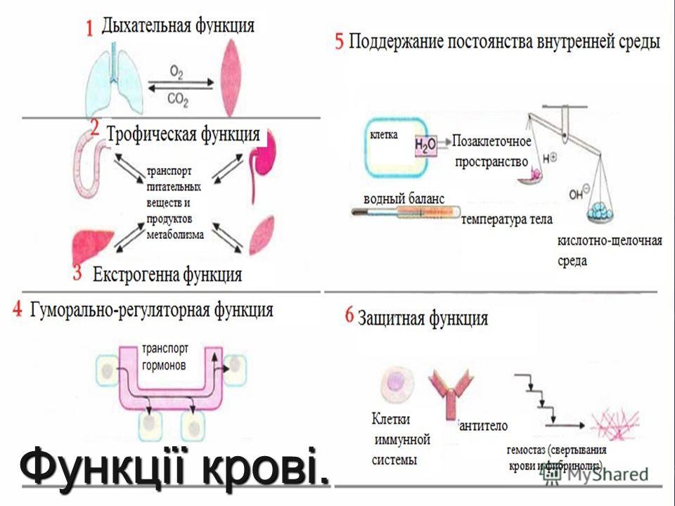 Кров - це рідка сполучна тканина, що складається з плазми, формених елементів і клітин: еритроцитів, лейкоцитів і тромбоцитів.
