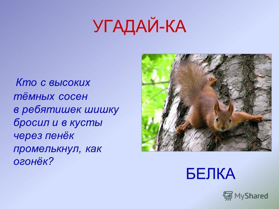 УГАДАЙ-КА ЁЖ Сердитый недотрога живёт в глуши лесной. Иголок очень много, а нитки не одной.
