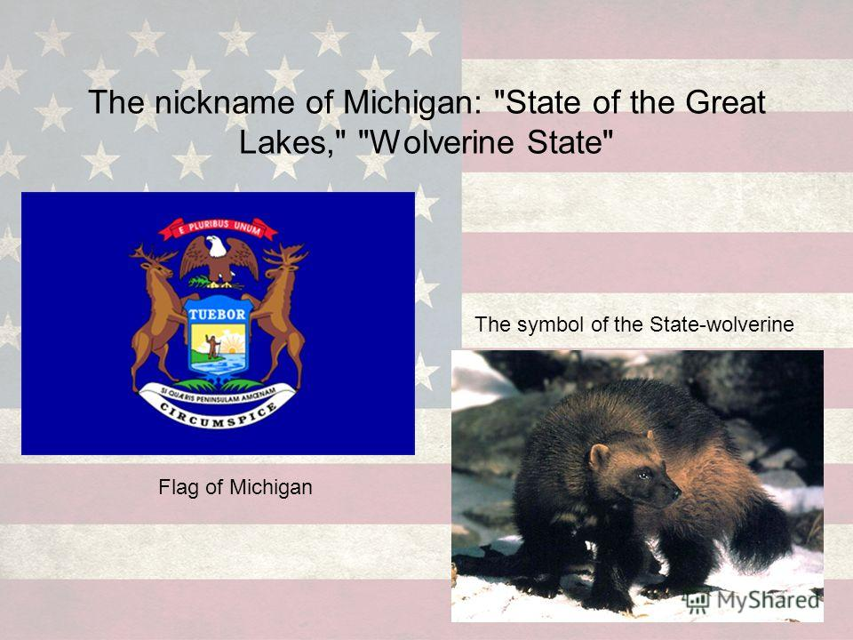 The nickname of Michigan: State of the Great Lakes, Wolverine State Flag of Michigan The symbol of the State-wolverine