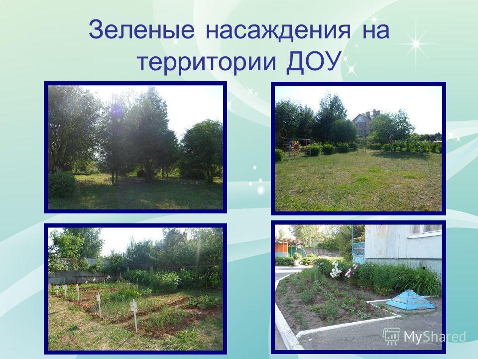 Зеленые насаждения на территории ДОУ