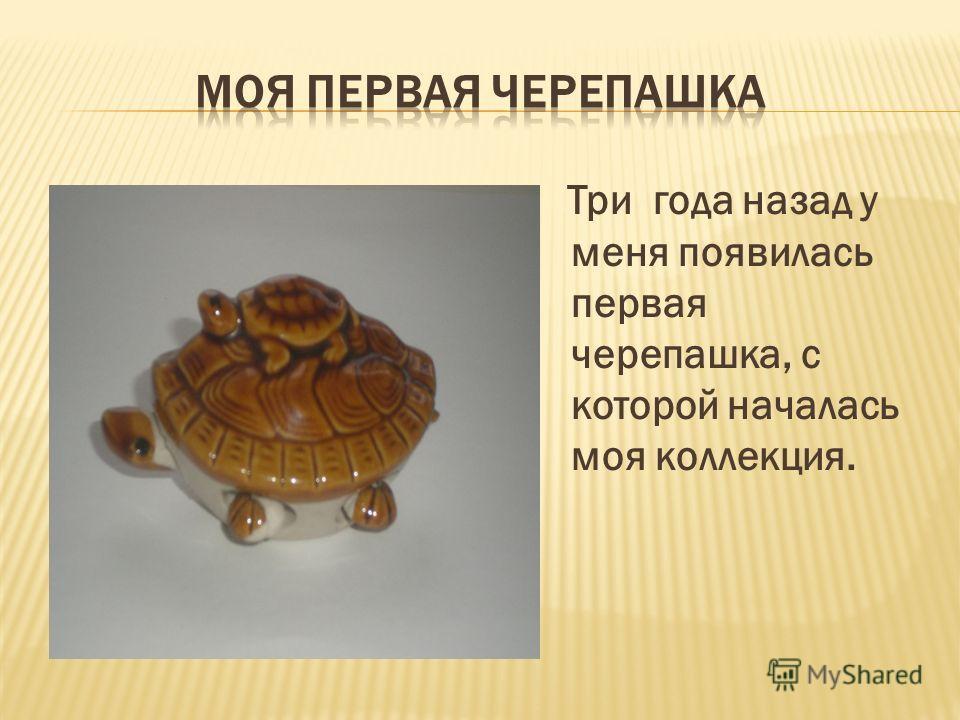 Три года назад у меня появилась первая черепашка, с которой началась моя коллекция.