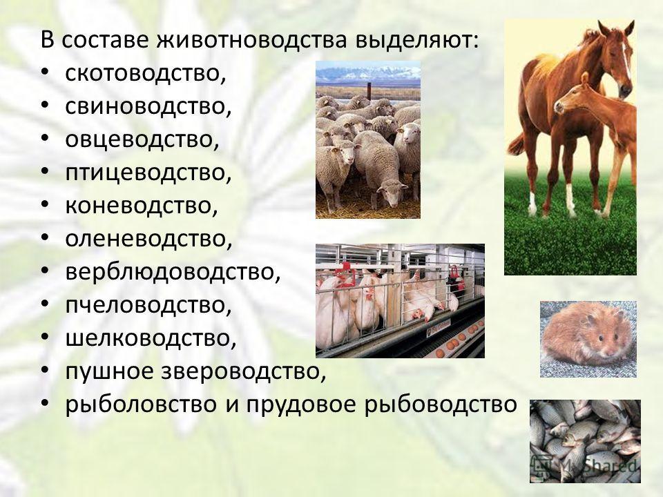 В составе животноводства выделяют: скотоводство, свиноводство, овцеводство, птицеводство, коневодство, оленеводство, верблюдоводство, пчеловодство, шелководство, пушное звероводство, рыболовство и прудовое рыбоводство