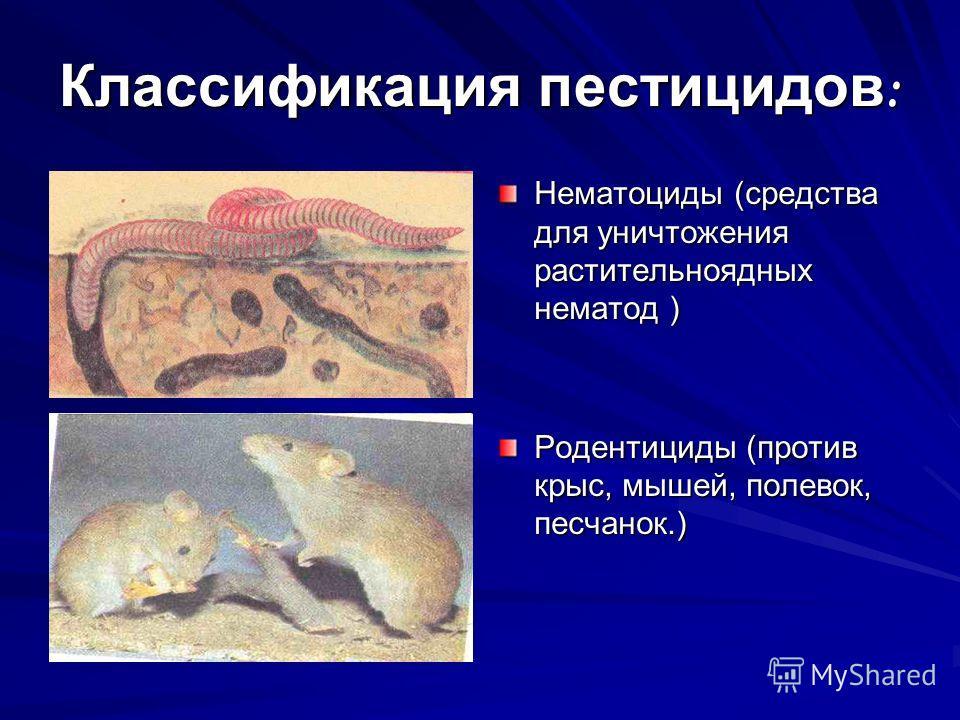 Классификация пестицидов : Нематоциды (средства для уничтожения растительноядных нематод) Нематоциды (средства для уничтожения растительноядных нематод ) Родентициды (против крыс, мышей, полевок, песчанок.)
