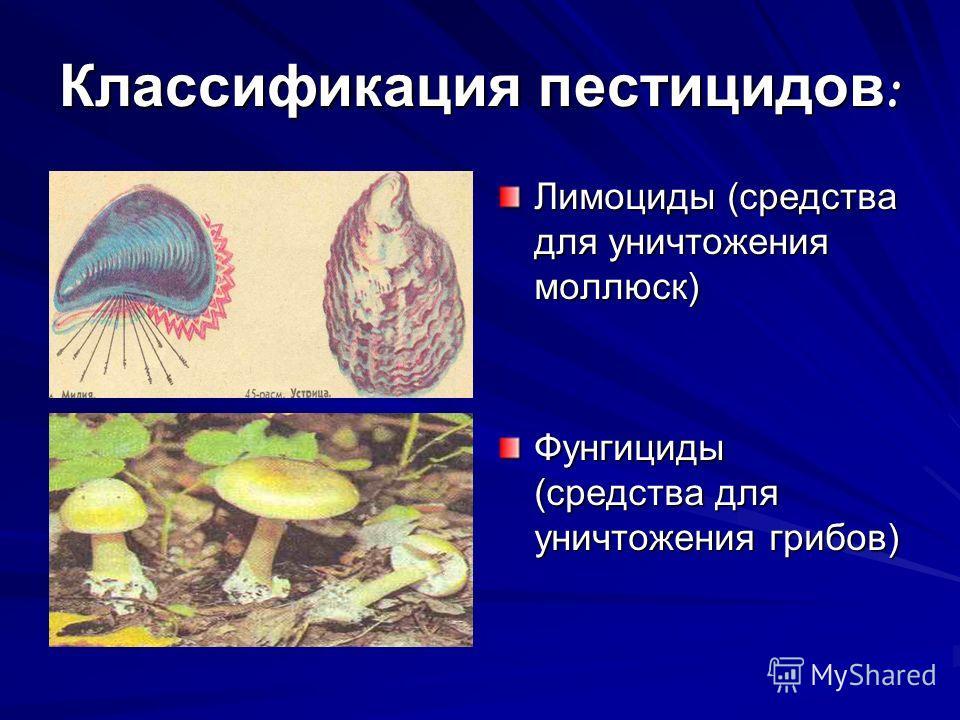 Классификация пестицидов : Лимоциды (средства для уничтожения моллюск) Фунгициды (средства для уничтожения грибов)