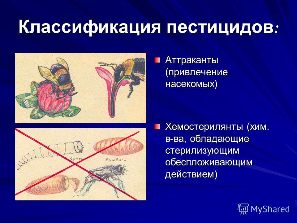 Классификация пестицидов : Аттраканты (привлечение насекомых) Хемостерилянты (хим. в-ва, обладающие стерилизующим обеспложивающим действием)