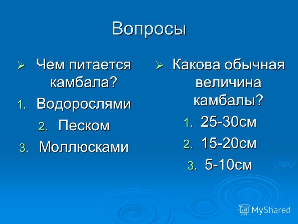 Вопросы Чем питается камбала? Чем питается камбала? 1. Водорослями 2. Песком 3. Моллюсками Какова обычная величина камбалы? Какова обычная величина камбалы? 1. 25-30 см 2. 15-20 см 3. 5-10 см