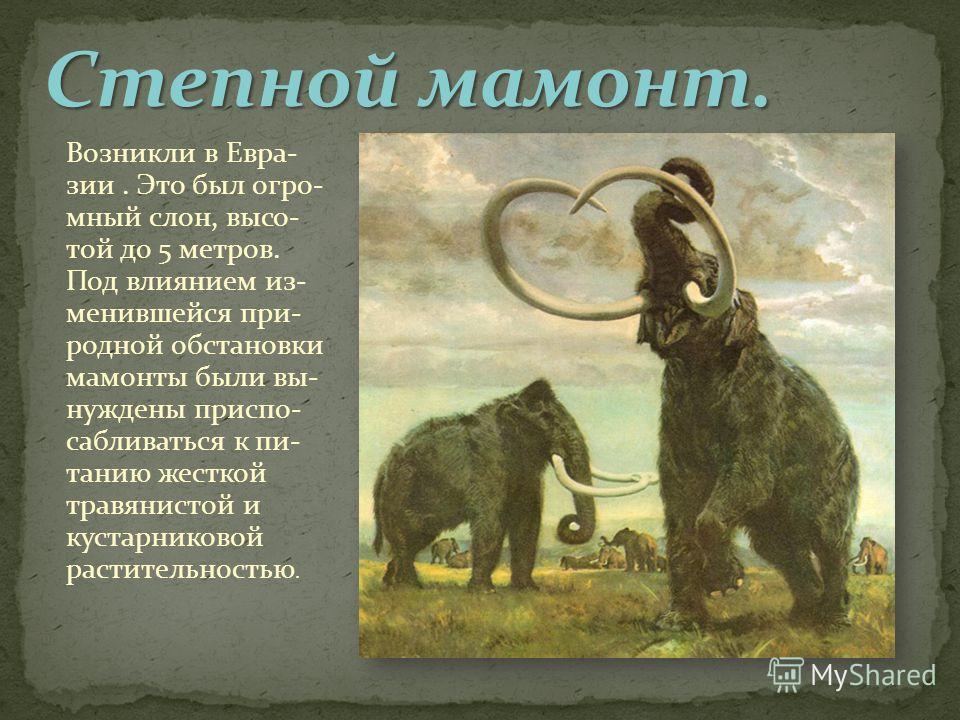 Возникли в Евра- зии. Это был огромный слон, высотой до 5 метров. Под влиянием из- менявшейся при- родной обстановки мамонты были вынуждены приспосабливаться к питанию жесткой травянистой и кустарниковой растительностью.