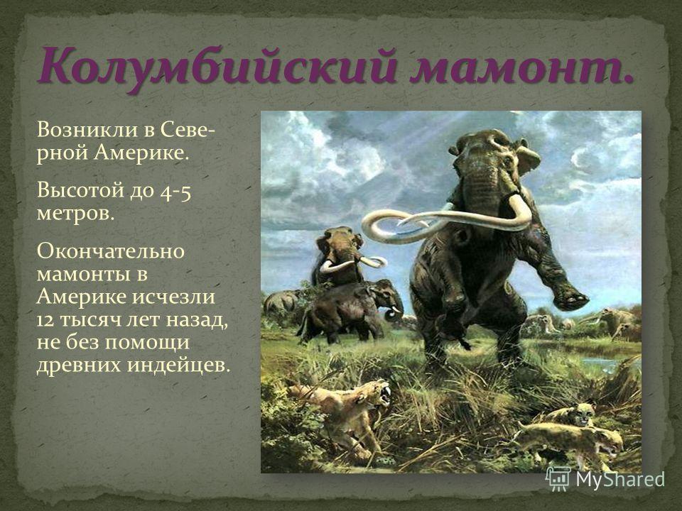 Возникли в Севе- рной Америке. Высотой до 4-5 метров. Окончательно мамонты в Америке исчезли 12 тысяч лет назад, не без помощи древних индейцев.