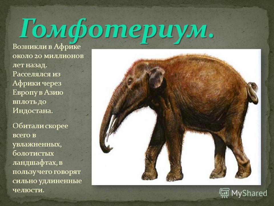 Возникли в Африке около 20 миллионов лет назад. Расселялся из Африки через Европу в Азию вплоть до Индостана. Обитали скорее всего в увлажненных, болотистых ландшафтах, в пользу чего говорят сильно удлиненные челюсти.