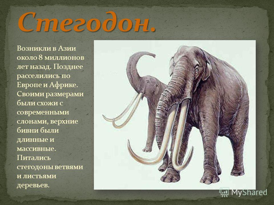 Возникли в Азии около 8 миллионов лет назад. Позднее расселились по Европе и Африке. Своими размерами были схожи с современными слонами, верхние бивни были длинные и массивные. Питались стегодоны ветвями и листьями деревьев.