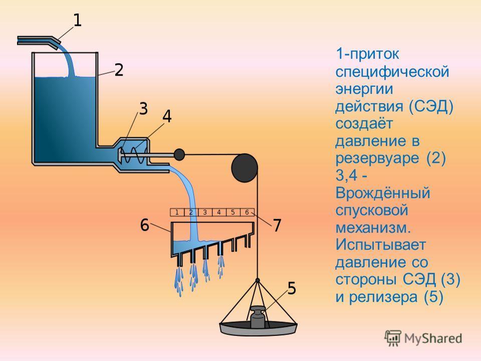 1-приток специфической энергии действия (СЭД) создаёт давление в резервуаре (2) 3,4 - Врождённый спусковой механизм. Испытывает давление со стороны СЭД (3) и релизера (5)